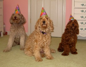 Birthday Party for an Australian Labradoodle
