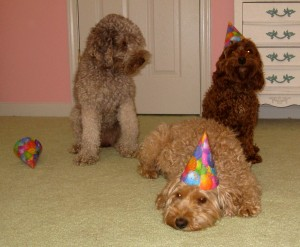 Australian Labradoodle Party