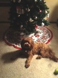 Burnie Christmas 2012