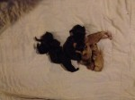 Brandy's newborns