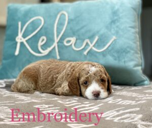 Parti ALD in front of teal Relax pillow