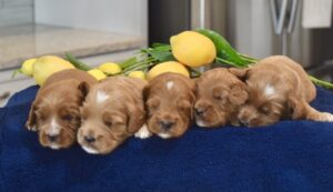 5 puppies in a row
